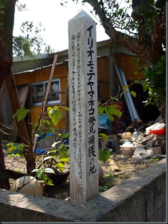 0306yamaneko
